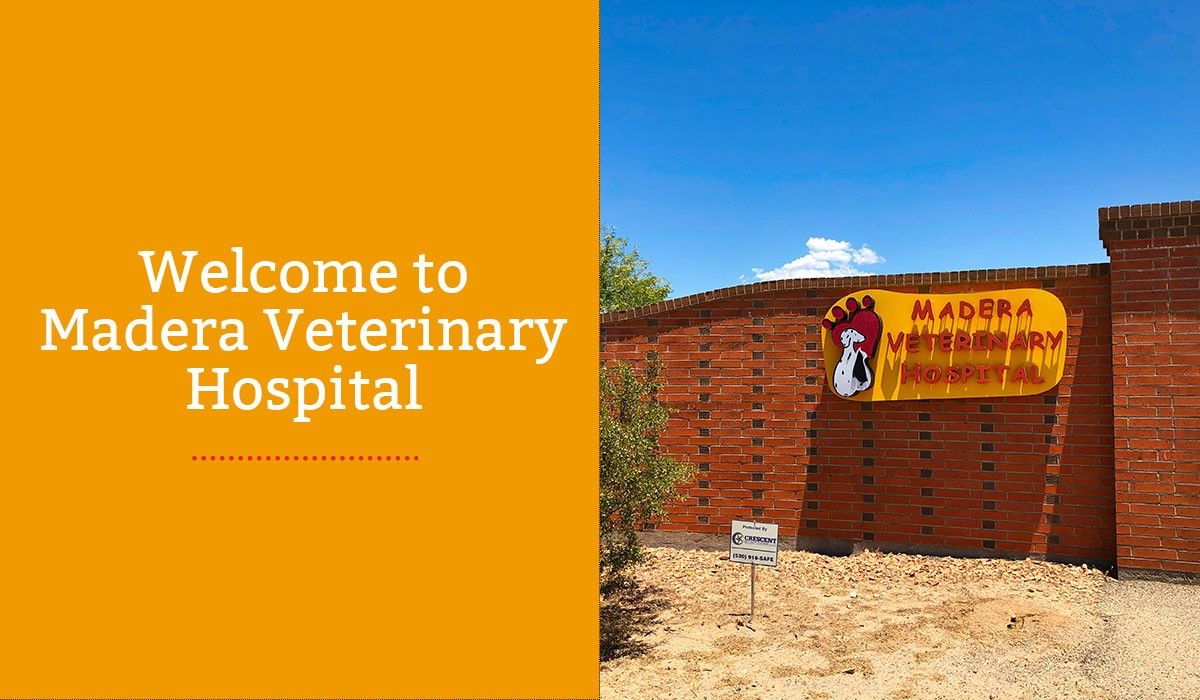 Welcome to Madera Veterinary Hospital