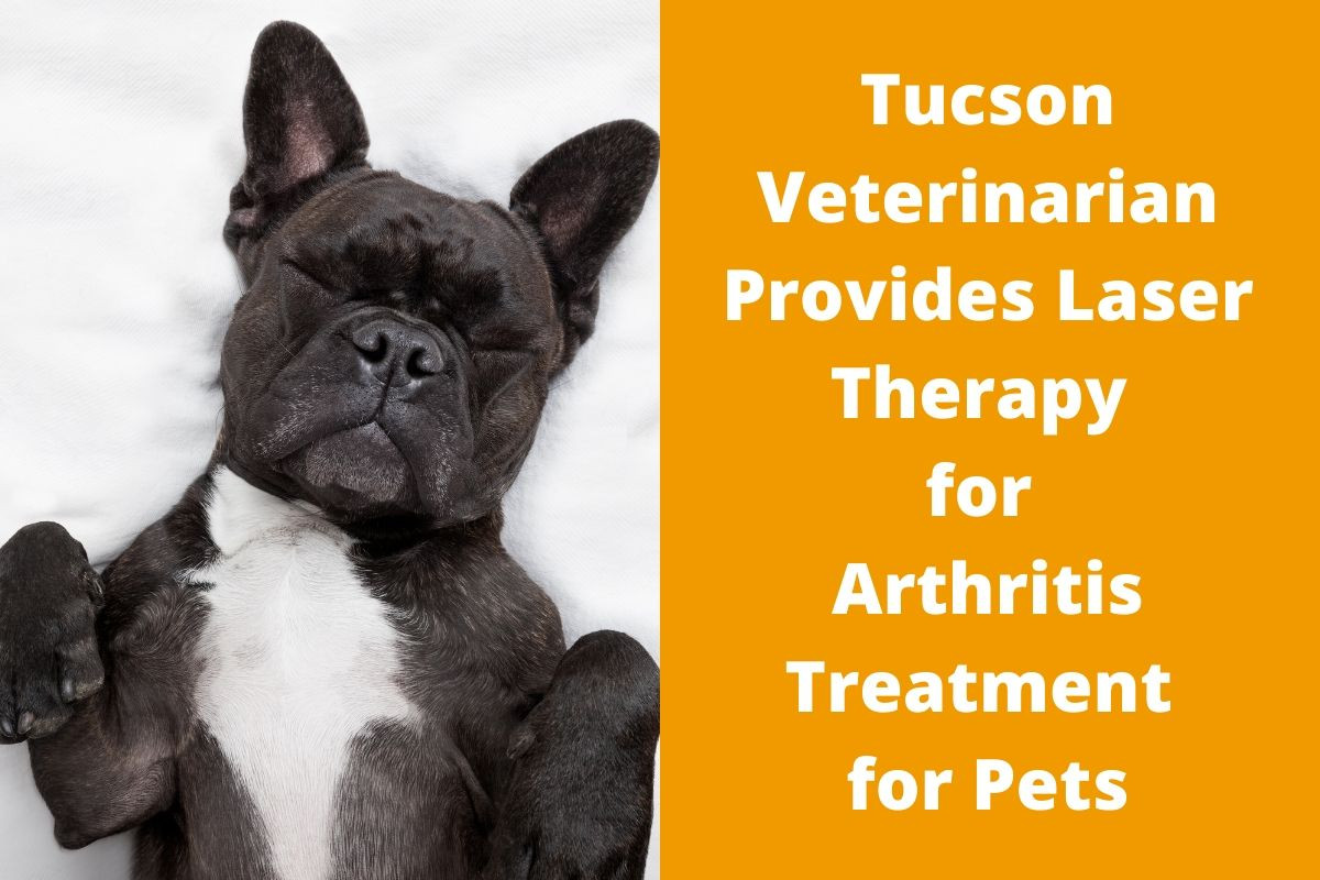 Tucson Veterinarian Provides Laser Therapy for Arthritis Treatment for Pets
