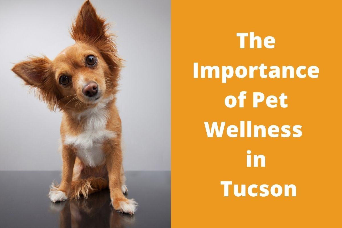 The-Importance-of-Pet-Wellness-in-Tucson