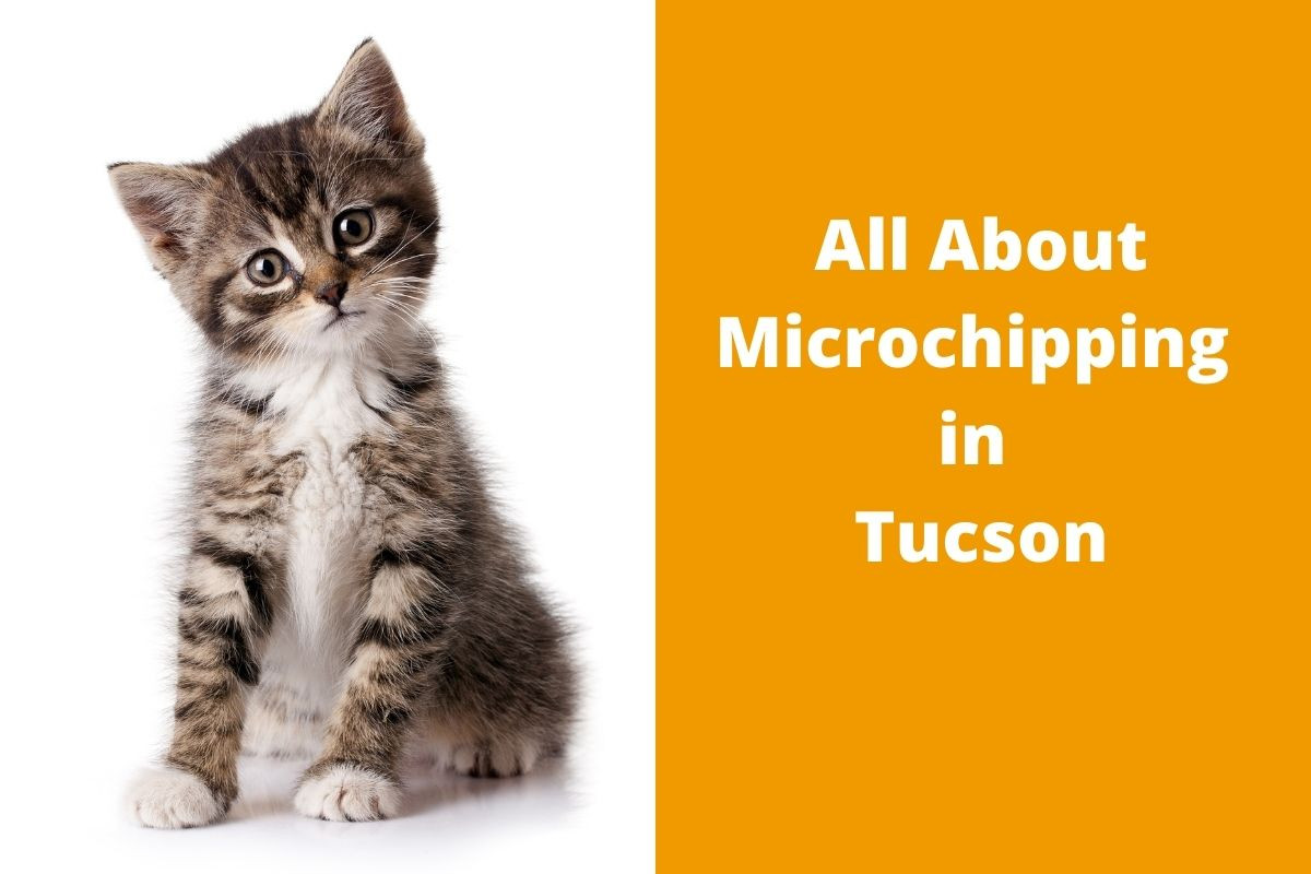 All-About-Microchipping-in-Tucson