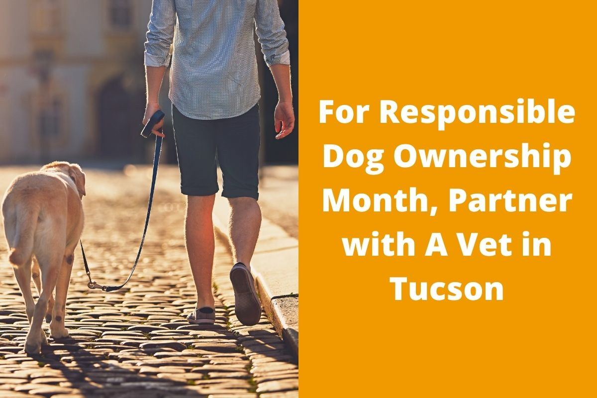 For-Responsible-Dog-Ownership-Month-Partner-with-A-Vet-in-Tucson